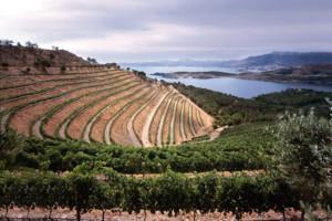 Vinyes de l'Alt Empordà, vora el mar